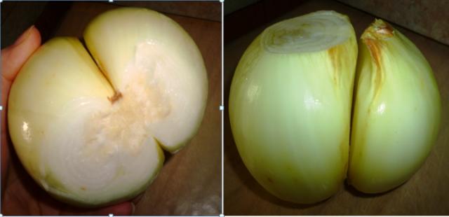 dbl onion pic
