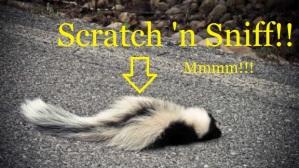 skunk roadkill