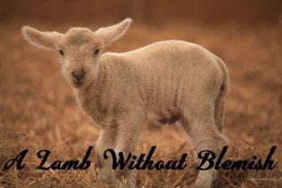 Lamb by Dan Smith