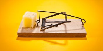 mousetrap-with-hard-cheese